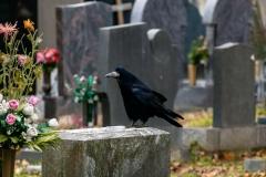 Spaziergang am Wr. Zentralfriedhof