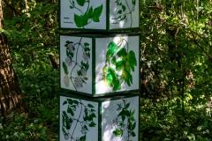 Lehrreiches über Pflanzen
