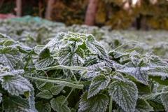 gefroren-0965