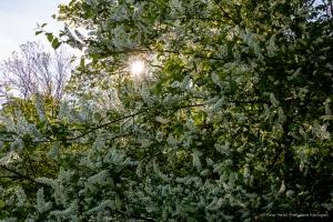 lichtblick Kierlingtal