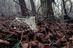 Die raureifen Spinnen