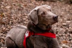 Erfahrener Suchhund 8 Jahre