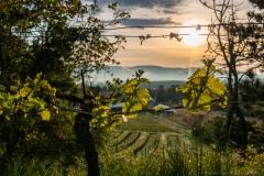 Spaziergang durch die Weinberge